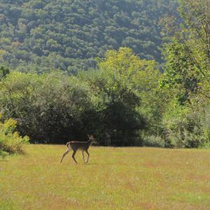 Wildlife Around Intake